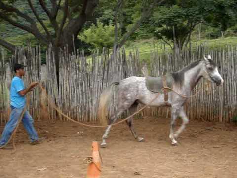 Doma Racional Cavalo Árabe
