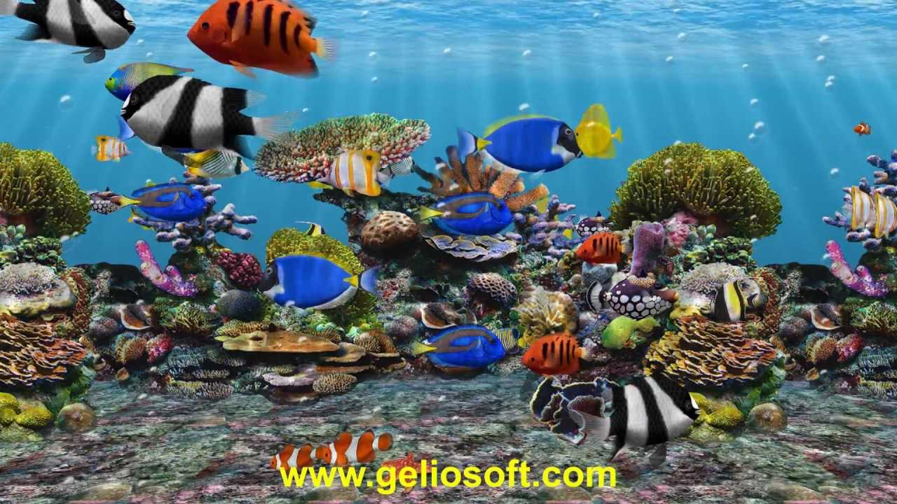 swimming fish screensaver video search engine at
