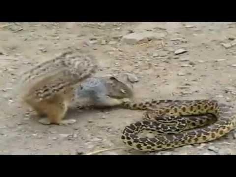 Animais Selvagens - Caçando suas presas