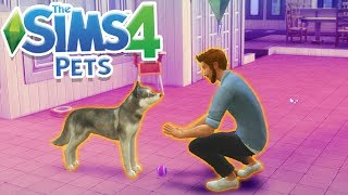 DOGGY TRAINING! | Sims 100 Cats& Dogs Challenge #2
