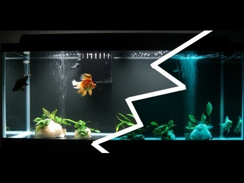 for Aquarium decoration for goldfish