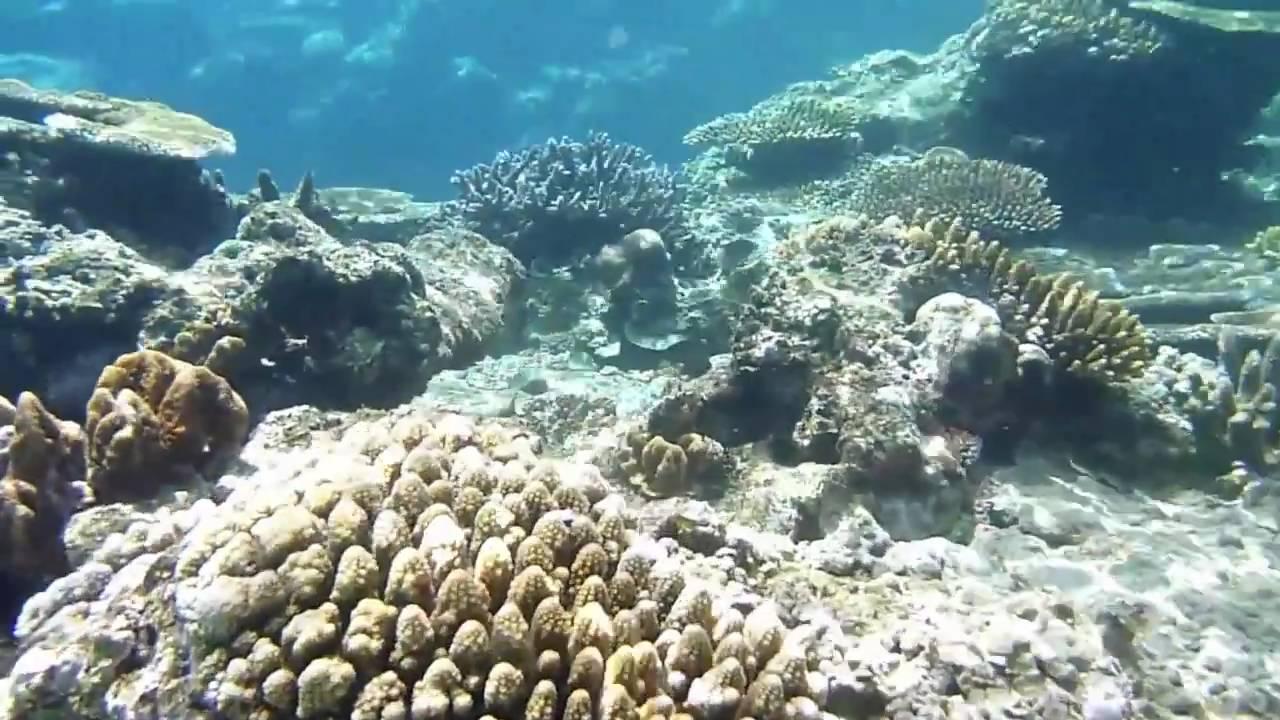 octopus and blue lagoon resorts fiji youtube. Black Bedroom Furniture Sets. Home Design Ideas