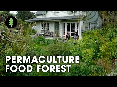 Thriving 23-Year-Old Permaculture Food Forest - An Invitation for Wildness