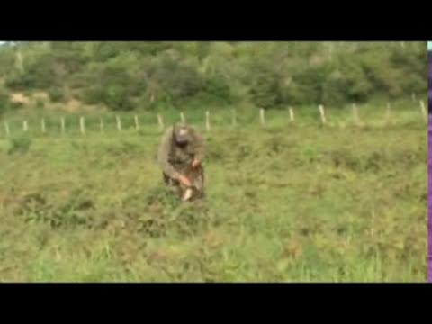 caceria de patos venezuela