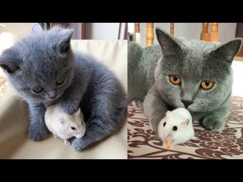 💗Aww - Funny and Cute Cat Compilation 2019💗 #7 - CuteVN