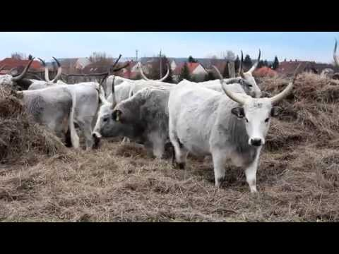 A magyar tej - The Hungarian Milk