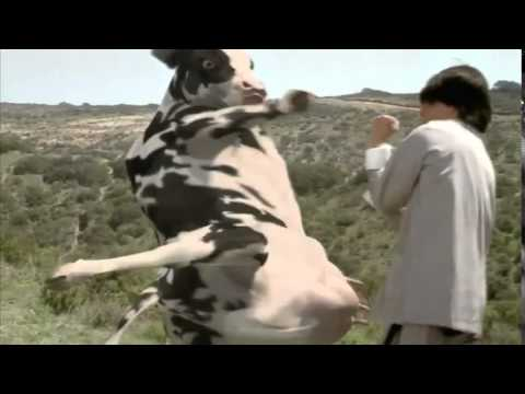 The Funny Man vs  Cow Fight (HQ)