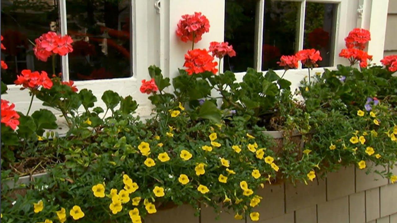 Window box container gardening p allen smith classics youtube - P allen smith container gardens ...