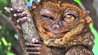 Ze Frank: True Facts About The Tarsier