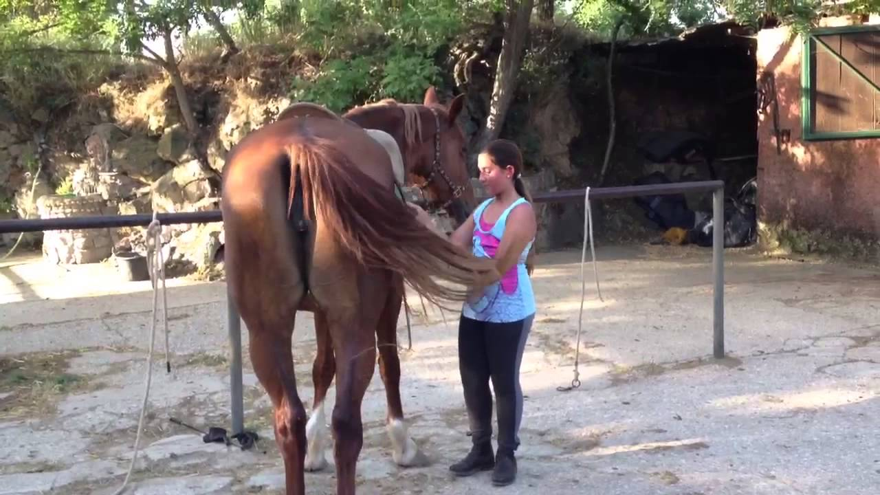 Giulia c a lezione di cavallo galoppo youtube for Immagini di cavalli da disegnare