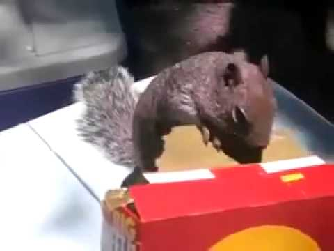 Cheez Its Squirrel Funny Video