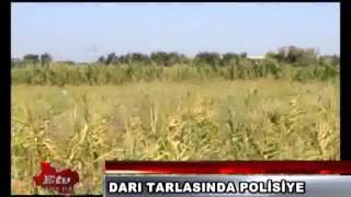 DARI TARLASINDA POLİS HIRSIZ ARADI