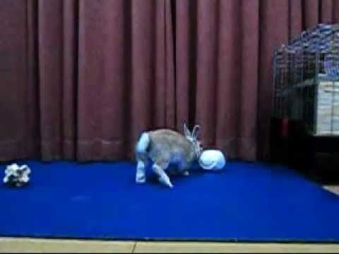 jumping rabbit