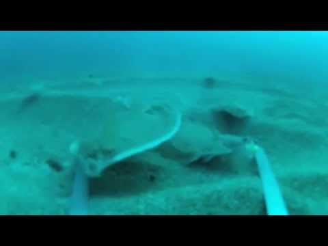 Fishing for flatfish gopro underwater footage m4v youtube for Best gopro for fishing