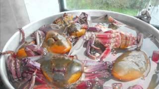 Aprende a preparar cangrejos