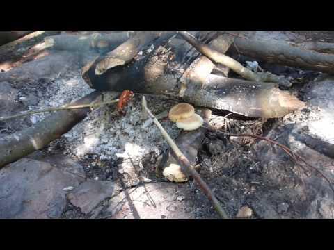 Einfach Würstel am Lagerfeuer | Outdoor Manfred Der Waldläufer