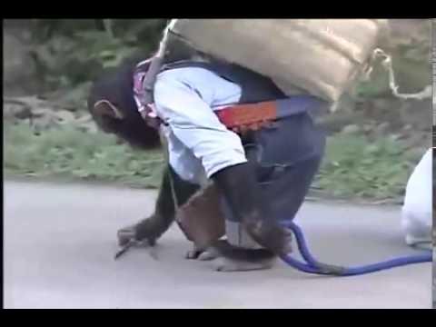 Đười ươi và chó thông minh ở Nhật Bản Cực hay, clip giải trí Nhật Bản