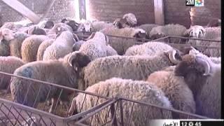 بالفيديو.. هذه هي الشروط الواجب توفرها في أضحية العيد صحيا ودينيا |
