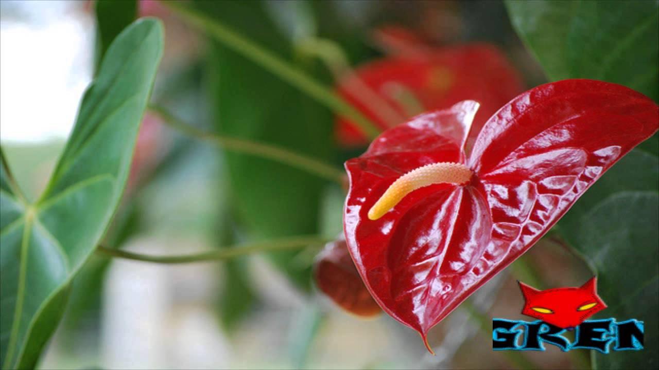 Las 10 flores mas peligrosas del mundo youtube - Fotos de plantas bonitas ...