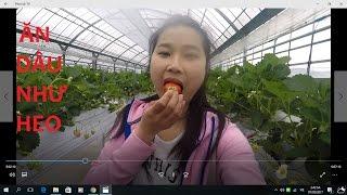 Tham Quan và Ăn dâu tại vườn ở Nhật || 4