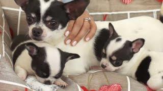 Cuidados de un perrito recien nacido