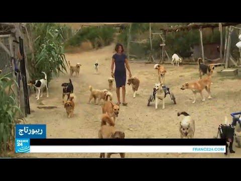 محمية لرعاية الحيوانات الضالة في المغرب !