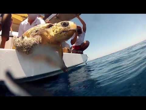 WWF Italia: Uomo e biodiversità nel canale di Sicilia