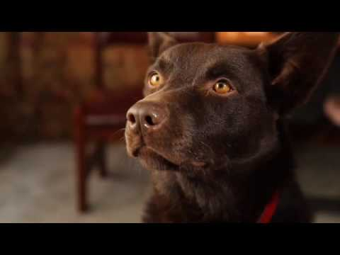 Koko's RED DOG Screen Test
