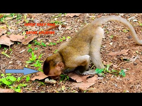 Funny Baby Monkey Maci Leaning On all Sleeping & Grooming, Baby Feed & Finding Herself