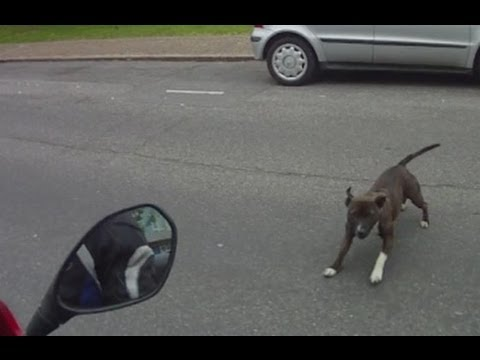 Dog Attacks Cyclist & Biker