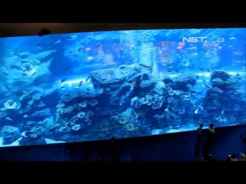 NET12 Wahana laut Raksasa Akuarium Terbesar di Dunia