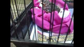 What To Feed A Baby Black Bird/How To Look After A Baby
