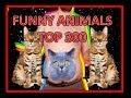 Top 300 Animals VERY FUNNY ANIMALS