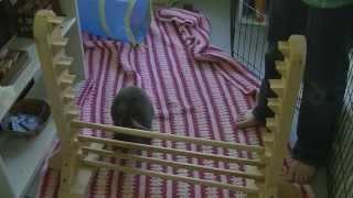 How To Agility Train Your Rabbit-Agility Jumps