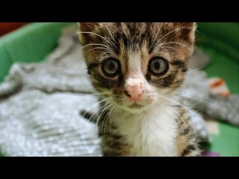 Happy Feet - Dynamo Kitten