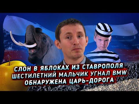 Девочка из Краснодара выгуливает собак за деньги