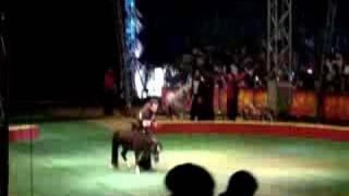Circo Los Valentinos (Baile De Los Ponis)