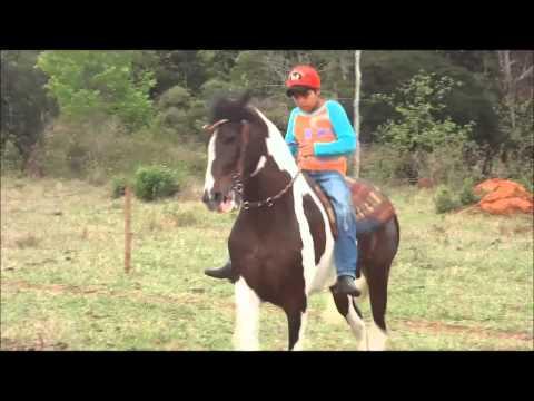 Criatório O.A Mangalarga Marchador e Pampa