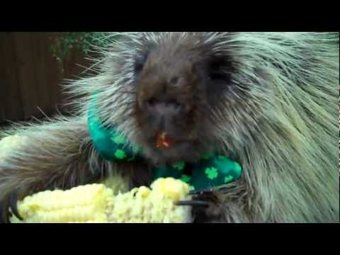 Teddy Bear the Porcupine's Pot of Gold