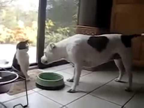 Cão x Gato - Super Divertido! Vídeos Engraçados 2014