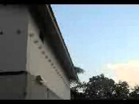 burung walet sabah