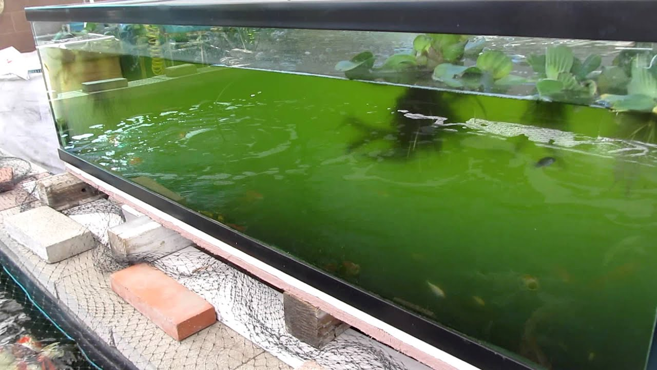 225 gallon koi fish tank youtube for 10 gallon koi tank
