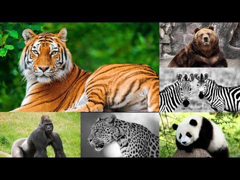 Tiếng kêu và hình ảnh các con vật cho bé | Con vật hoang dã | P1