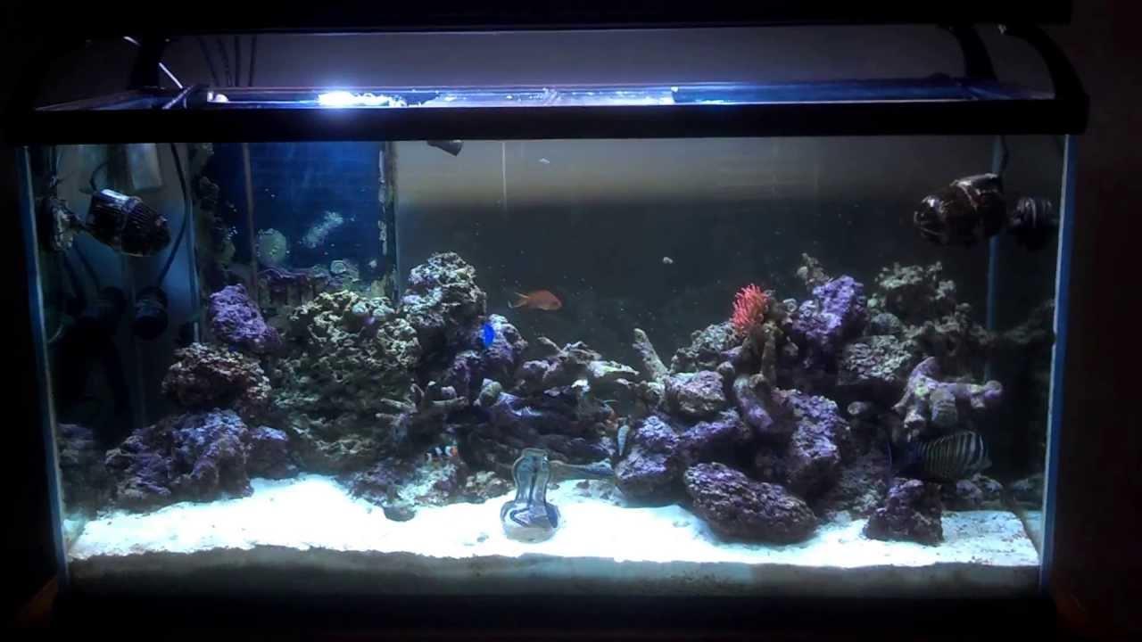 90 Gallon Aquarium : 90 gallon community reef aquarium - YouTube