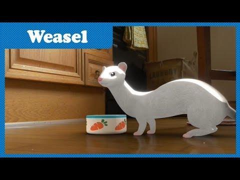 Ep28 Weasel | Space Jungle S2 | Funny Cartoon | Kids Cartoon | COAN Studio