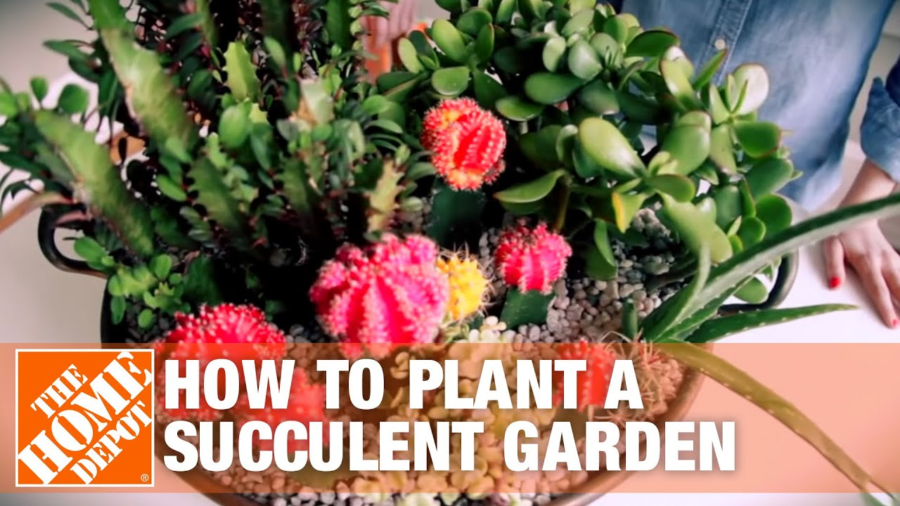 How To Plant A Succulent Container Garden Youtube