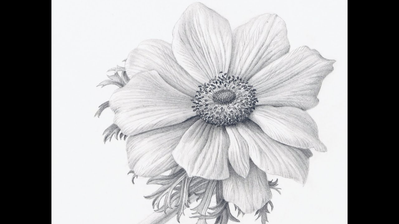 Drawing Scribble Flower : Pencil drawings drawing realistic flowers