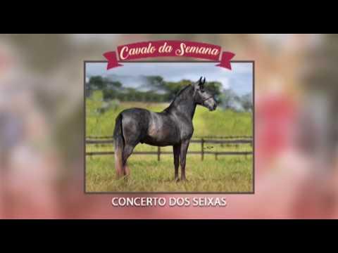 CAVALO DA SEMANA - CONCERTO DOS SEIXAS - MANGALARGA MARCHADOR