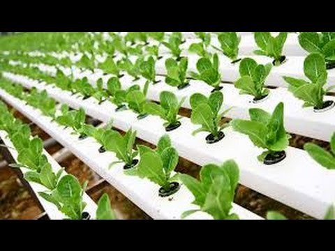 Hydroponic Gardening - Grow Organic Plants Fast