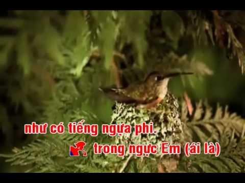 Bản sao của Gặp nhau giữa rừng mơ Karaoke
